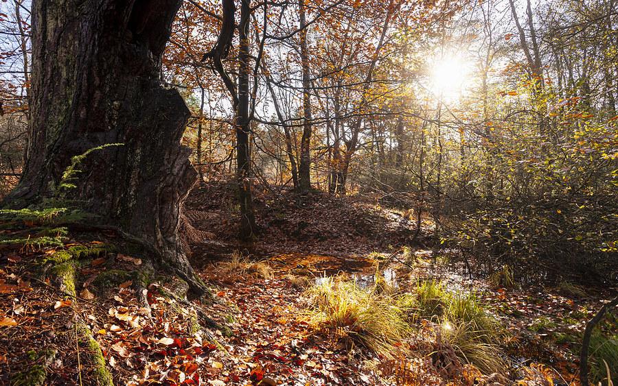 Autumn Sun / Photography by Snowyman, Post processing by Snowyman, Artwork by Snowyman / Uploaded 16th December 2019 @ 03:33 PM