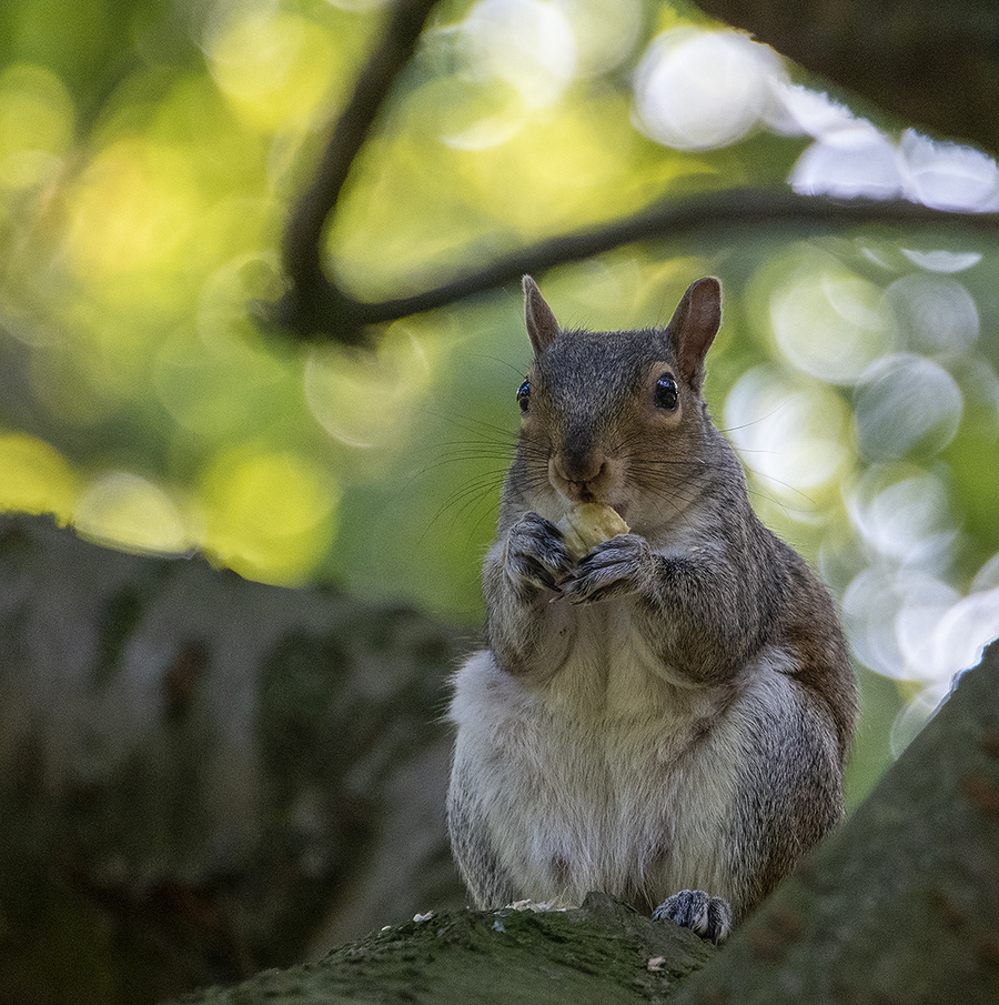 This nut is all mine / Photography by John Kirk / Uploaded 4th April 2021 @ 05:55 PM