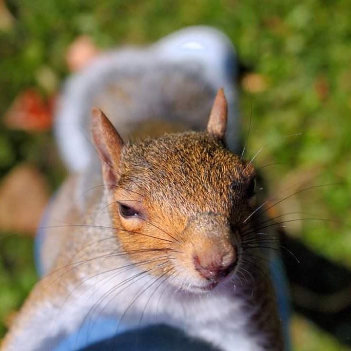 Got any nuts? / Photography by JJ Phoenix / Uploaded 22nd September 2019 @ 07:20 AM