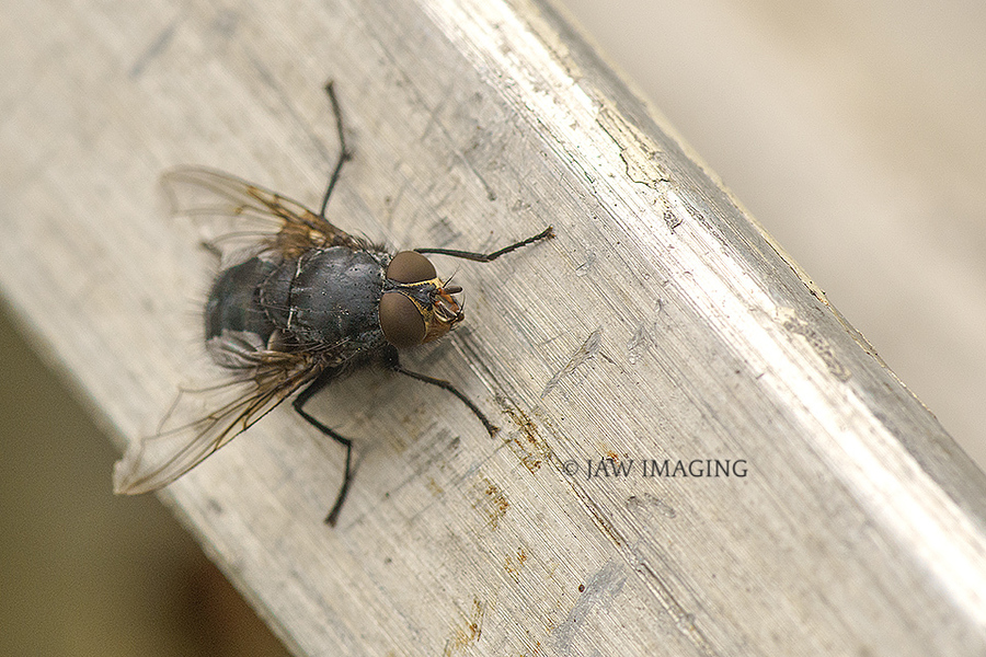 The Fly. / Photography by Jaw Imaging, Post processing by Jaw Imaging / Uploaded 11th May 2020 @ 08:48 PM