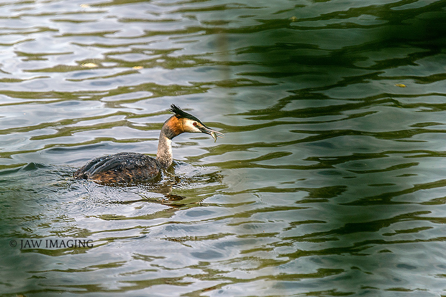 Gone Fishing / Photography by Jaw Imaging, Post processing by Jaw Imaging / Uploaded 19th May 2020 @ 12:00 PM