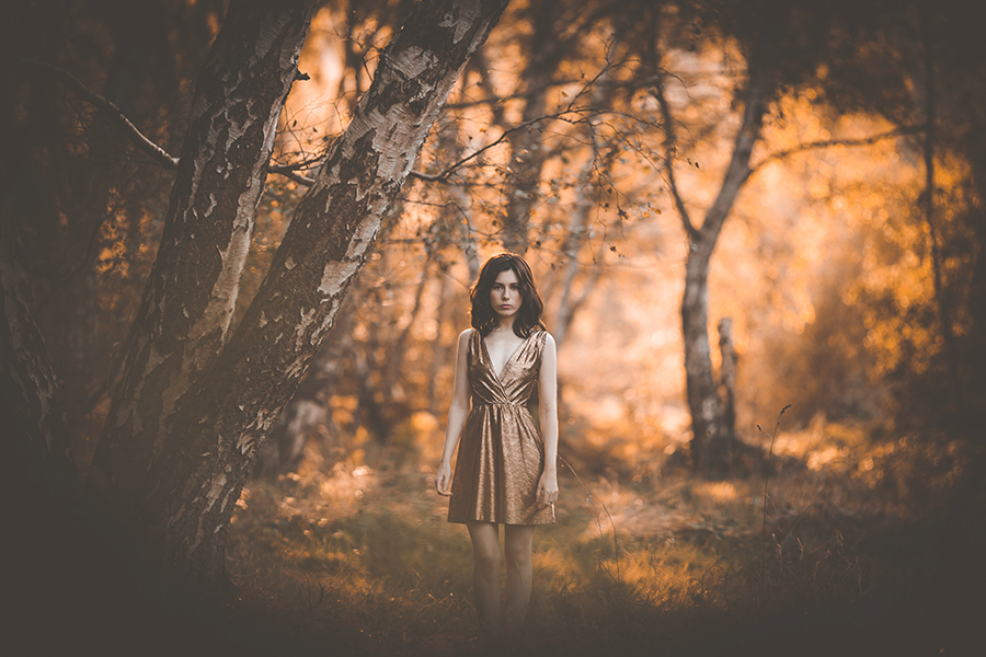 Golden Autumn 1 / Photography by M Rezi, Post processing by M Rezi / Uploaded 27th October 2016 @ 01:11 PM