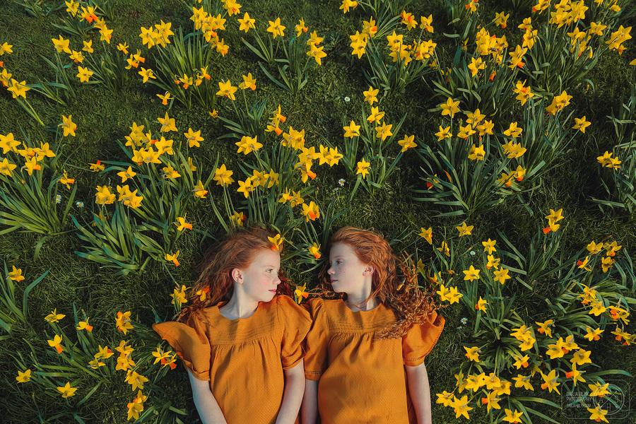 Daffodils / Photography by Darja, Post processing by Darja, Stylist Darja / Uploaded 16th March 2018 @ 11:10 PM