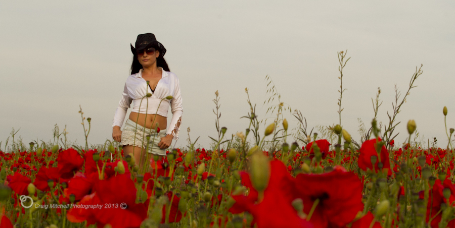 A Bed Of Poppies / Photography by cpmitchell / Uploaded 26th July 2013 @ 07:52 PM