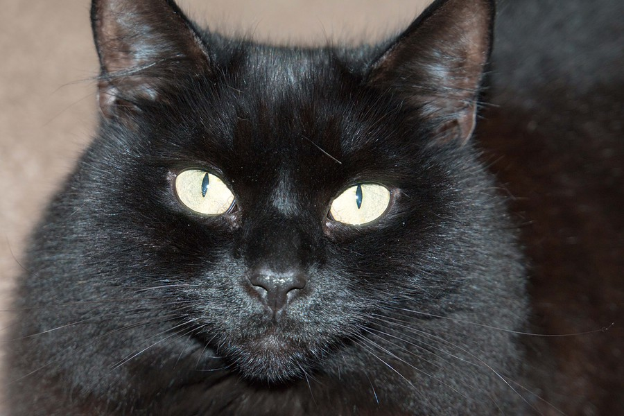 Happy National Black Cat Day 2016 / Photography by Laurence / Uploaded 27th October 2016 @ 08:43 AM