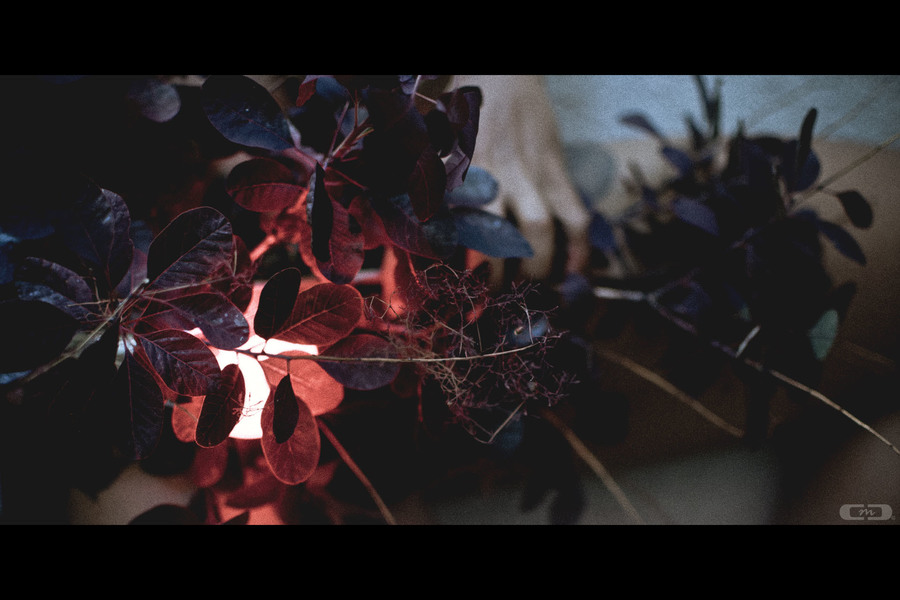 skin : leaves : light / Photography by Chris Cook, Model Lexi Thorn / Uploaded 28th July 2021 @ 07:19 AM