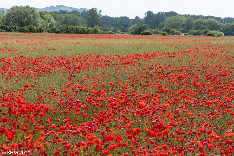 Poppy Field... / Photography by Tugmaster / Uploaded 8th June 2020 @ 06:12 PM