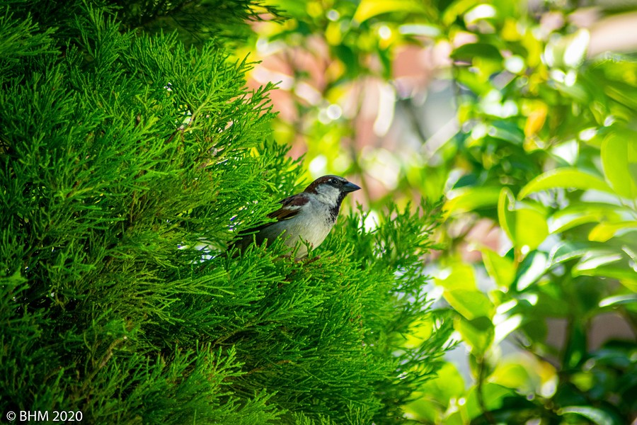 Bird in the bush... / Photography by Tugmaster / Uploaded 24th June 2020 @ 05:13 PM