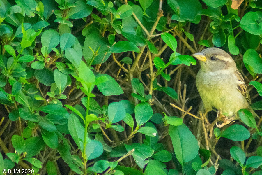 Bird in the bush... / Photography by Tugmaster / Uploaded 25th June 2020 @ 02:57 PM