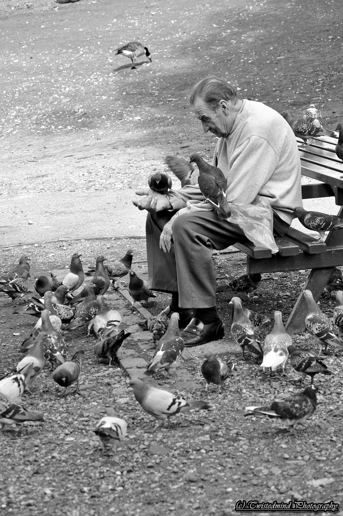 Feeding the birds / Photography by Twistedmind Photography, Model Twistedmind Photography / Uploaded 14th August 2013 @ 03:36 PM