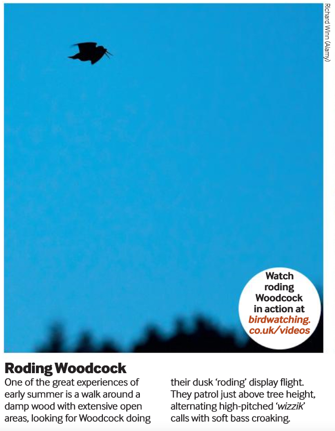Roding Woodcock Birdwatching Magazine / Photography by Richard Winn / Uploaded 18th September 2019 @ 09:57 PM
