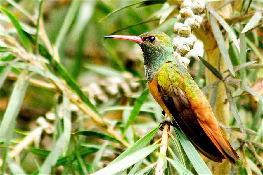 Humming bird, Lorca Museum, Lima, Peru / Photography by Jerome Razoir / Uploaded 6th June 2015 @ 03:39 PM