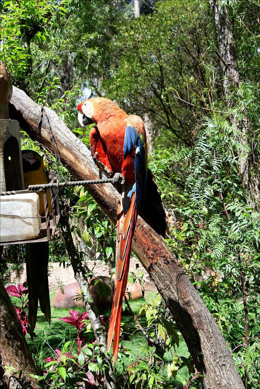 Green Winged Macaw. / Photography by Jerome Razoir / Uploaded 5th June 2015 @ 07:38 PM