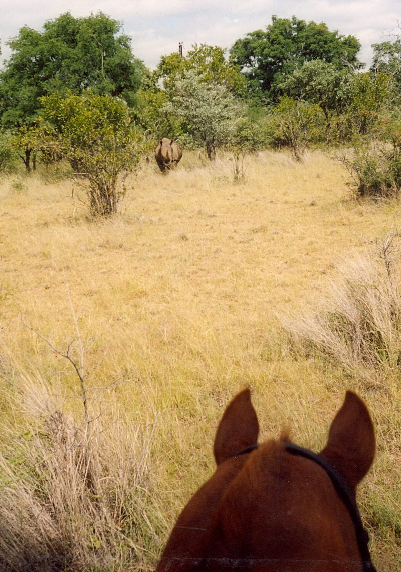 I can see the rhino well enough from back here Dad, I don't need to come any closer. / Photography by Huw / Uploaded 7th January 2015 @ 12:01 PM