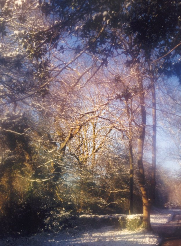 Winter Scene / Photography by DavidBallard / Uploaded 4th August 2012 @ 07:32 PM