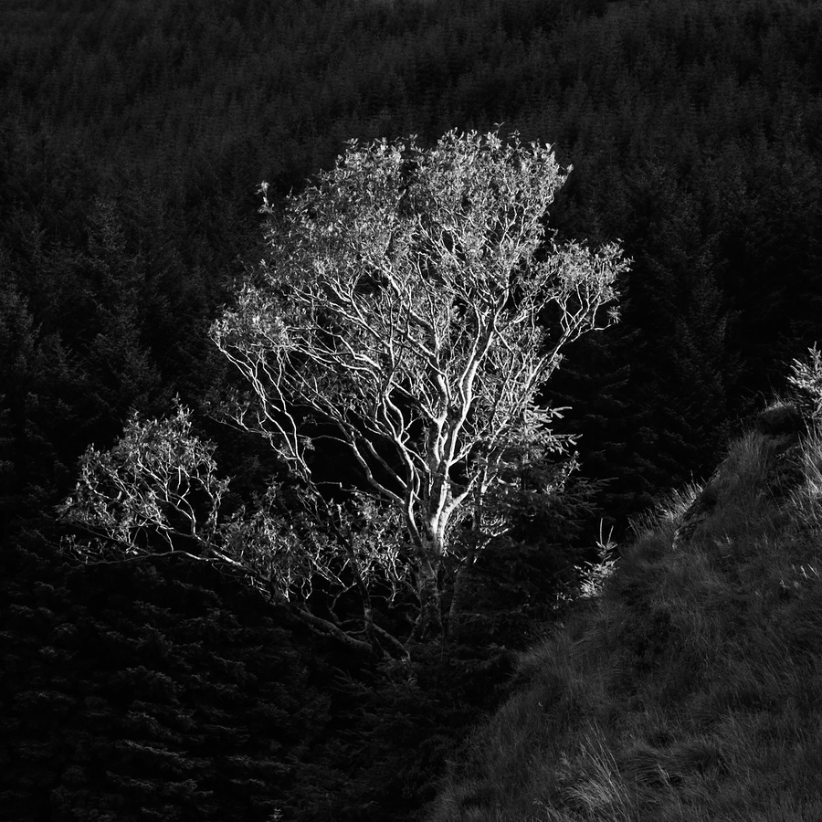 Tree Scape / Photography by DJG_Images / Uploaded 30th September 2012 @ 10:39 AM