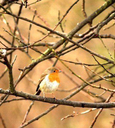 Another of my wildlife wonders / Photography by RMF / Uploaded 8th January 2021 @ 07:42 AM