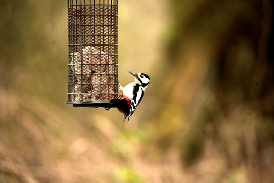 The Woodpecker / Photography by RMF / Uploaded 12th January 2021 @ 07:19 AM