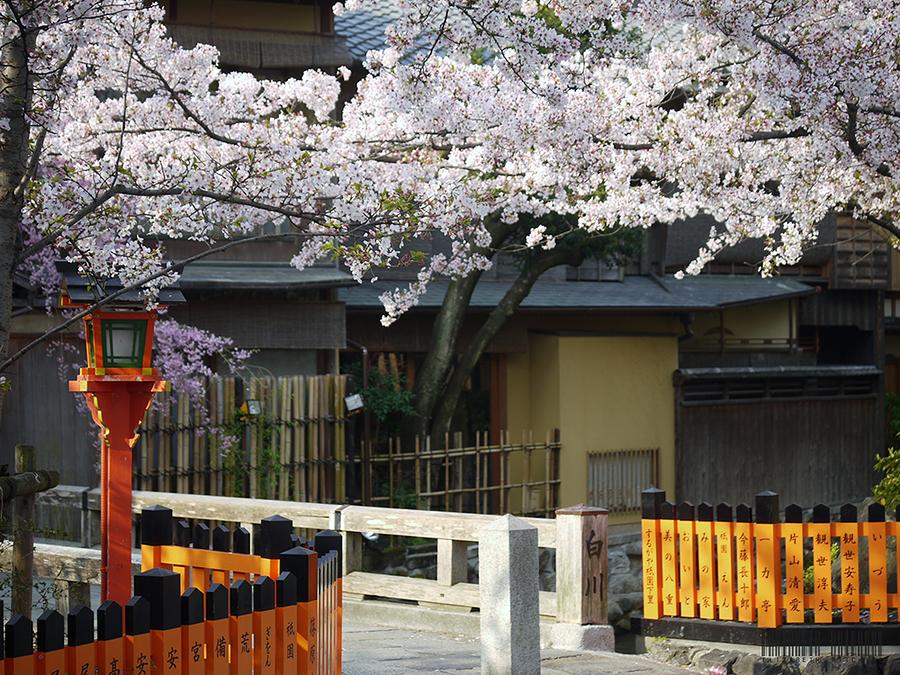 Cherry Ice / Photography by Kimono Stylist, Post processing by Kimono Stylist / Uploaded 14th April 2017 @ 06:11 AM