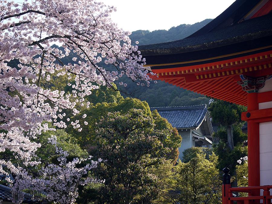 Kiyomisu Dera Kyoto / Photography by Kimono Stylist, Post processing by Kimono Stylist / Uploaded 14th April 2017 @ 06:14 AM