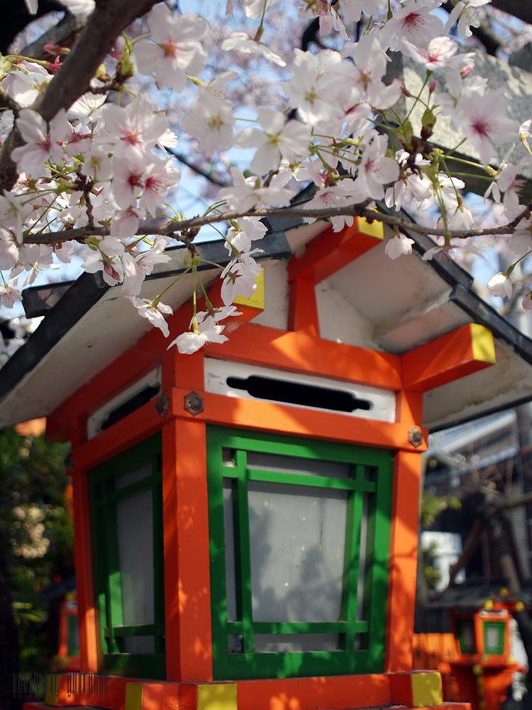 Old Kyoto / Photography by Kimono Stylist, Post processing by Kimono Stylist / Uploaded 14th April 2017 @ 06:17 AM