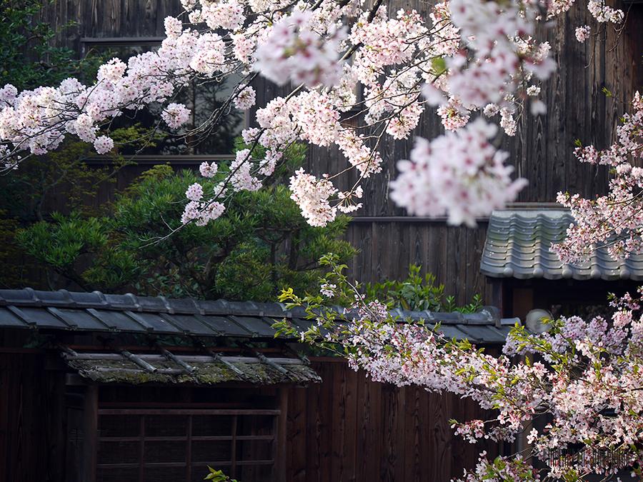Traditional Hanamachi (Geisha District) Kyoto / Photography by Kimono Stylist, Post processing by Kimono Stylist / Uploaded 14th April 2017 @ 06:22 AM