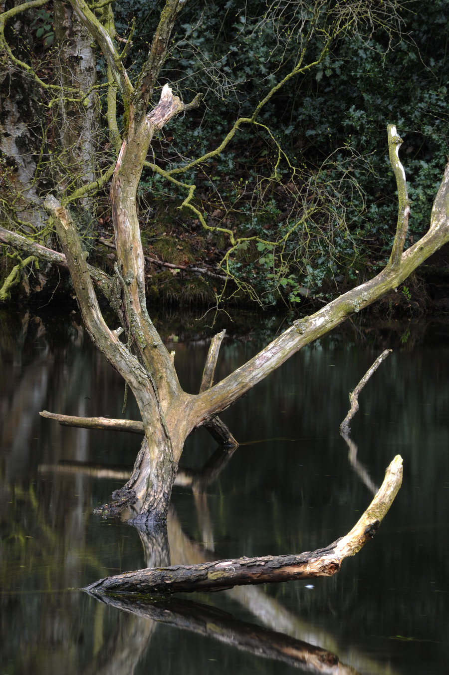 Dead tree in lake /  / Uploaded 18th May 2015 @ 06:56 PM