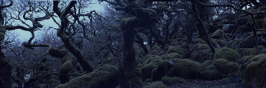 Wistman's Wood, Devonshire 2014 / Photography by girlsonfilm / Uploaded 23rd October 2016 @ 01:57 AM