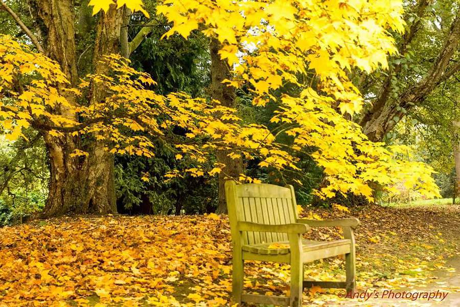 Take a seat. / Photography by Andy's photography / Uploaded 24th October 2016 @ 05:14 PM