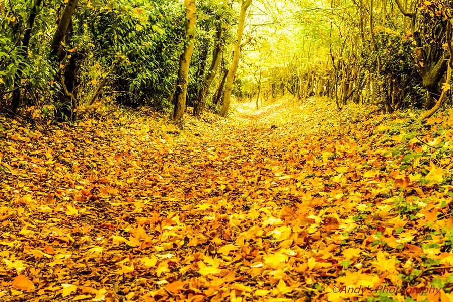 Golden Autumn Paths. / Photography by Andy's photography / Uploaded 30th October 2016 @ 06:27 PM