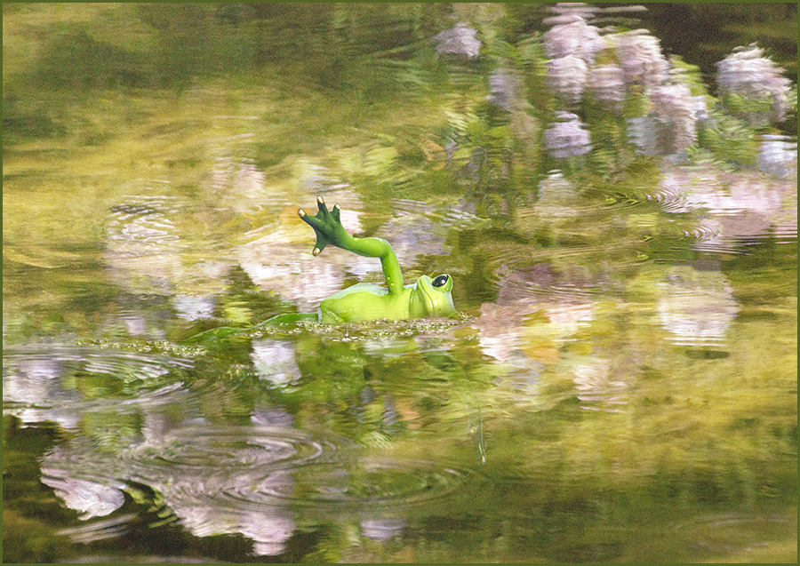 Taking a Swim / Photography by Wendy7 / Uploaded 27th January 2016 @ 05:30 PM