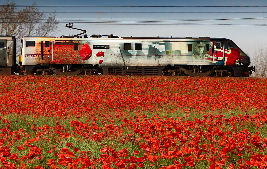 We will remember them. / Photography by Bill / Uploaded 28th October 2014 @ 10:44 AM