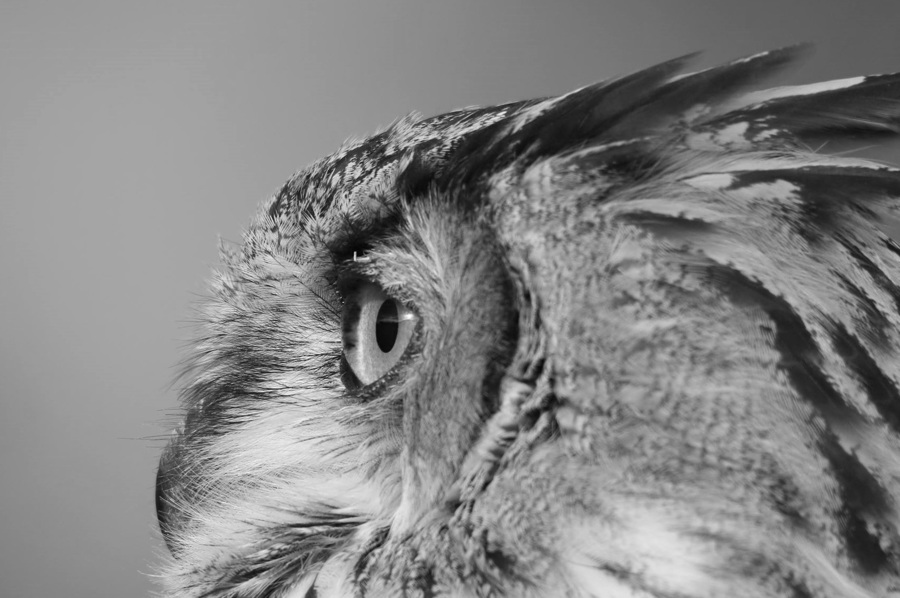 A Hoot of a shot / Photography by To the Moon Photography / Uploaded 26th October 2016 @ 03:05 PM